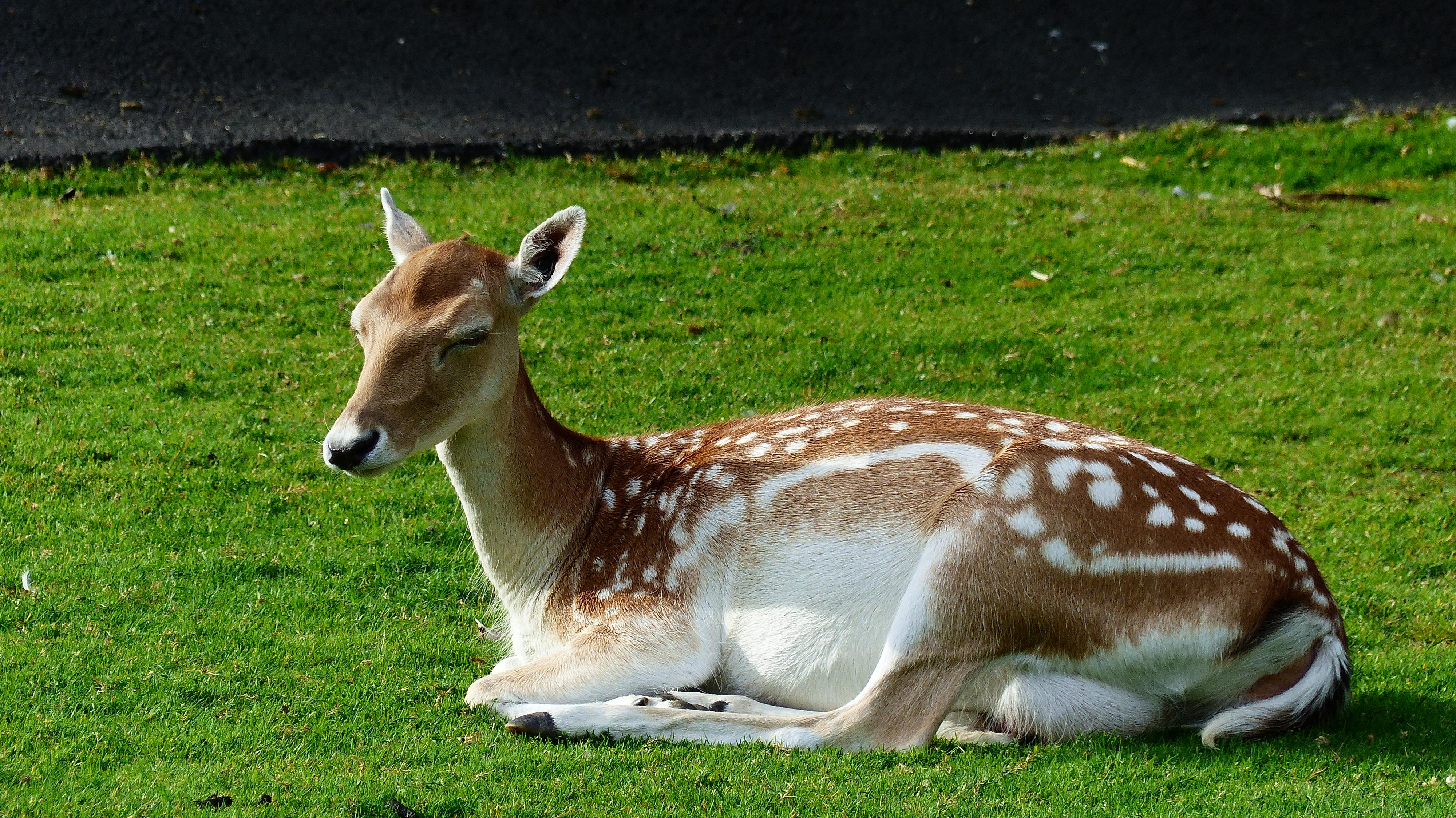 Tips To Keep Deer Out Of Your Yard